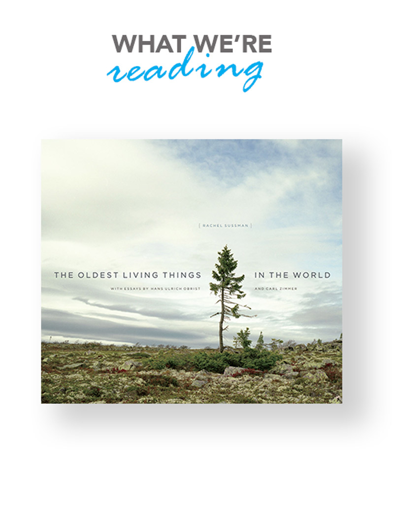 oldest-living-things
